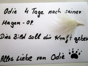 Odie2